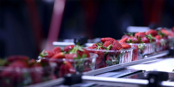 Food manufacturing and packaging of strawberries